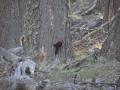 El Chalten - Woody woodpecker