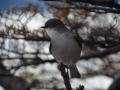 El Calafate - Un autre oiseau