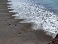 Punta Tombo - Bord de mer, embarquement et débarquement de manchots