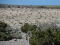 Punta Tombo - Colonie de manchots de Magellan