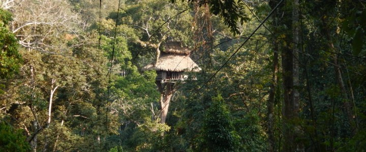 Gibbon Experience: let's have fun in the jungle!