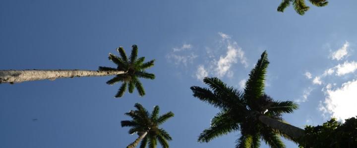 Ilha Grande, la quête de la plage idéale